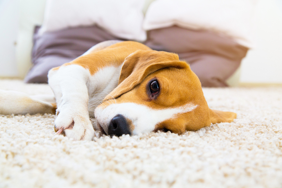 Our Top Tips for Selling Your Home For Pet Owners